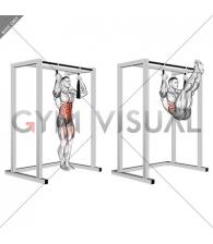 Arm slingers Hanging Straight Legs
