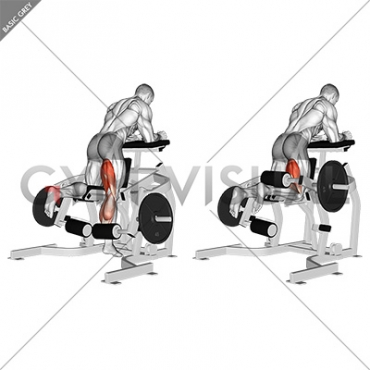 Lever Kneeling Leg Curl (plate loaded) - Gym visual