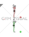 Biceps Curl - Arms Body (WRONG-RIGHT)
