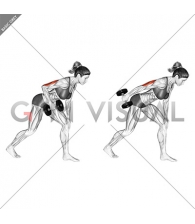Dumbbell One Arm Kickback (female)