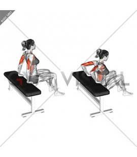 Bench Dip (knees bent) (female)