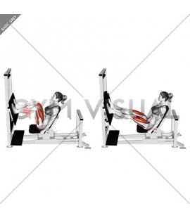 Lever Horizontal Leg Press (female)