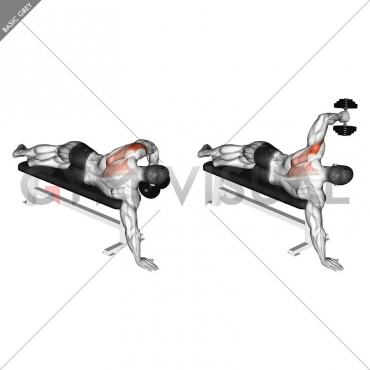 Dumbbell Lying One Arm Deltoid Rear