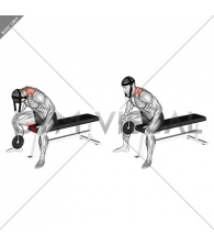 Weighted Seated Neck Extension with head harness