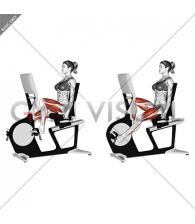 Bicycle Recline Walk (female)