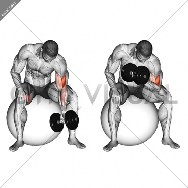 Dumbbell One Arm Concetration Curl (on stability ball)