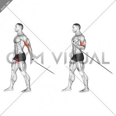 Cable One Arm Biceps Curl (VERSION 2)
