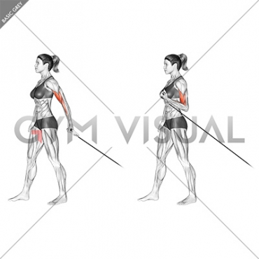 Cable One Arm Biceps Curl (VERSION 2) (female)
