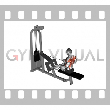 Cable Seated Row with V-bar