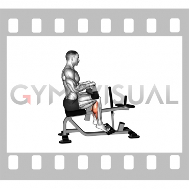 Lever Seated Calf Raise (plate loaded) (VERSION 2)