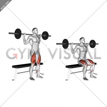 Barbell Bench Squat