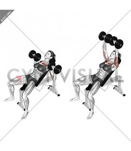 Dumbbell Incline Bench Press (female)