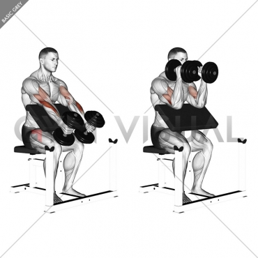Dumbbell Peacher Hammer Curl