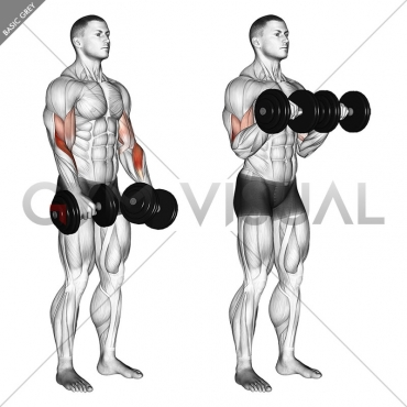 Dumbbell Revers grip Biceps Curl
