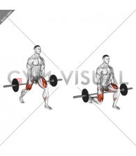 Barbell Split Squat (VERSION 2)