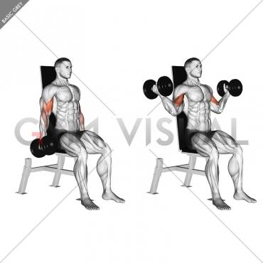 Dumbbell Seated Inner Biceps Curl