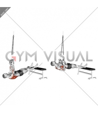 Suspender Weighted Inverted Row