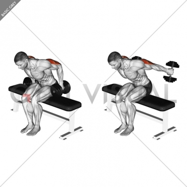 Dumbbell Seated Kickback