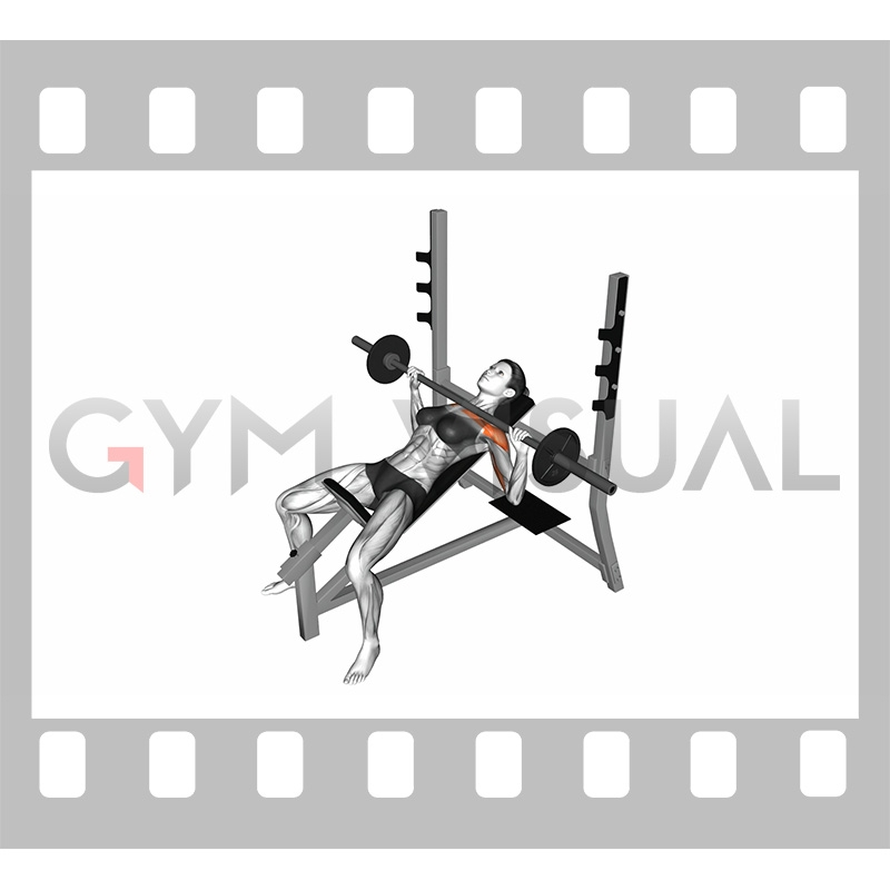 Brilliant Barbell Incline Bench Press Female Gmtry Best Dining Table And Chair Ideas Images Gmtryco