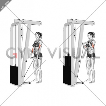 Cable Standing Reverse Grip Curl (Straight bar) (female)