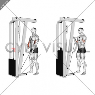 Cable Standing Reverse Grip Curl (Straight bar)