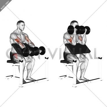 Dumbbell Seated Preacher Curl