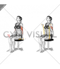 Resistance Band Seated Biceps Curl (female)