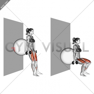 Dumbbell Squat (back on stability ball wall)