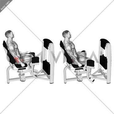 Lever Seated Hip Abduction