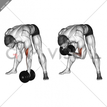 Dumbbell Standing Concentration Curl