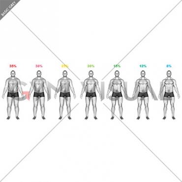 Body Fat Percentage (male)