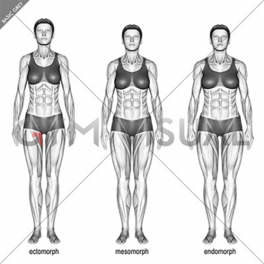 Body Type (female)