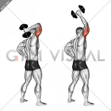 Dumbbell Standing One Arm Extension