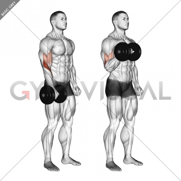 Dumbbell Standing One Arm Reverse Curl