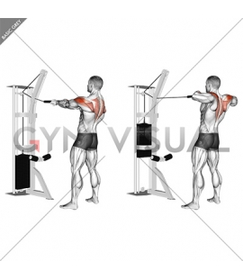 Cable Standing Rear Delt Horizontal Row (with rope)