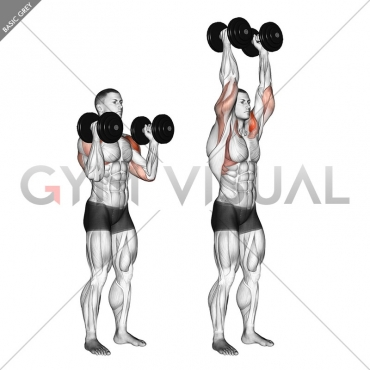Dumbbell Standing Palms In Press