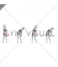 Standing Two Side Bend (bent arm) (female)