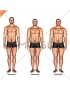 Body Type (male)