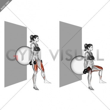 Dumbbell Sumo Squat (back on stability ball wall)