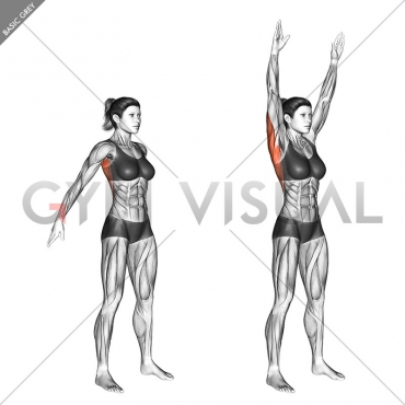 Dynamic Back Stretch