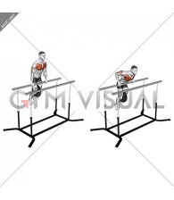 Weighted Straight Bar Dip