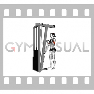 Cable Standing Reverse-Grip Curl (Straight bar) (female)