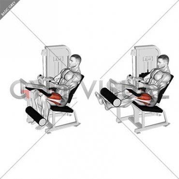 Lever Seated Leg Extension (VERSION 2)