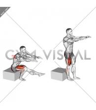 Single Leg Low Box Squat