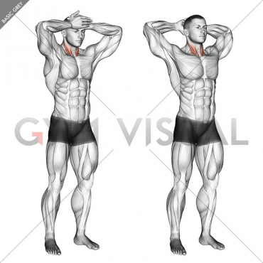 Front and Back Neck Stretch