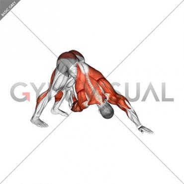 downward facing dog spine mobility