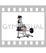 Lever Seated Calf Raise (plate loaded) (female)