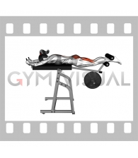 Lever Reverse Hyperextension (plate loaded) (female)