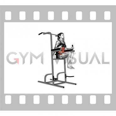 Vertical Leg Raise (on parallel bars) (female) (VERSION 2)