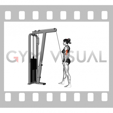 Cable Standing One Arm Triceps Extension (female)